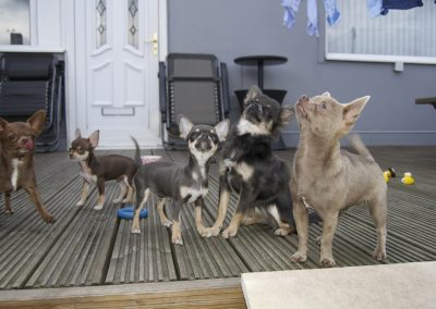 NK9 Dogs Leeds Canine Services Gallery (3)