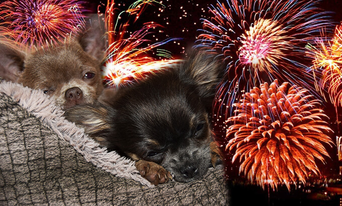 How To Help Your Pets Cope with Firework Season