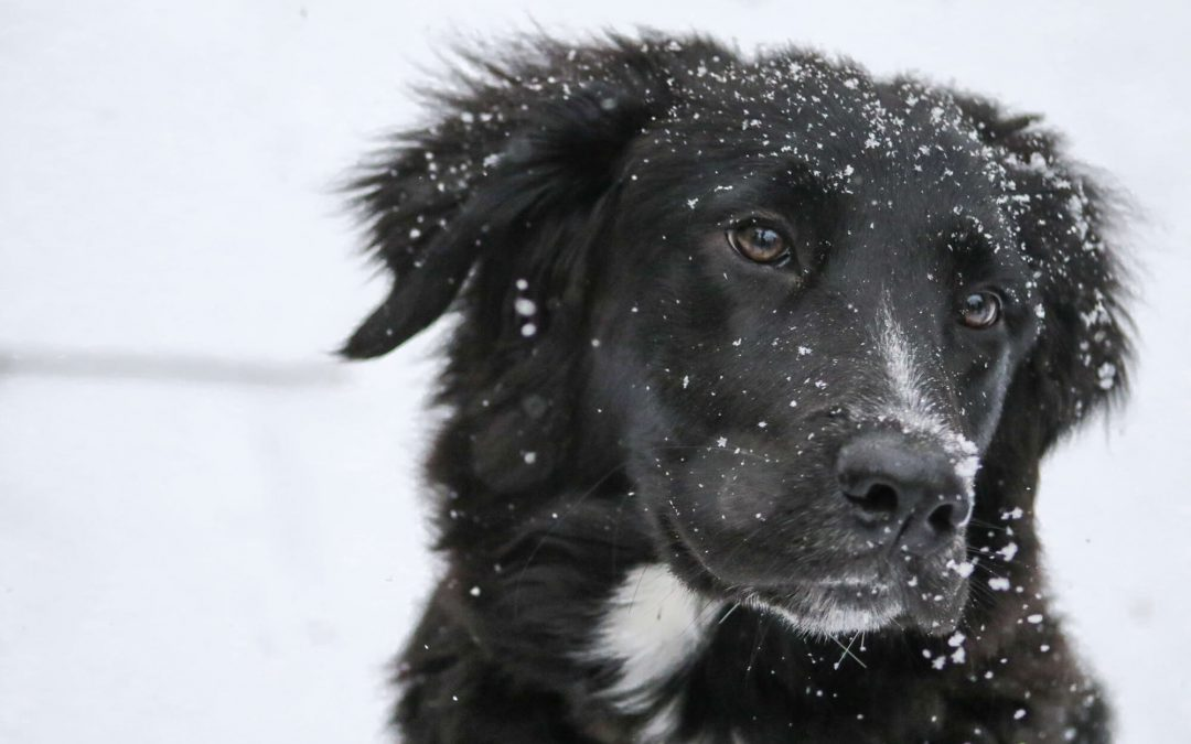 Ideas of Exercising Your Dog In Winter