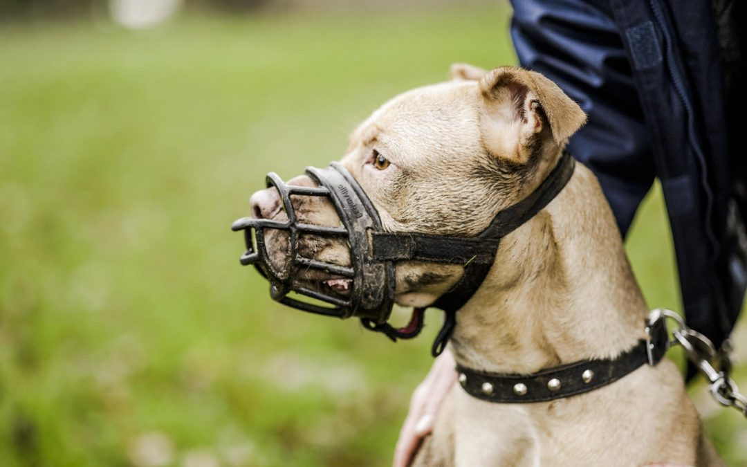 Behaviour Training Methods Using Muzzles