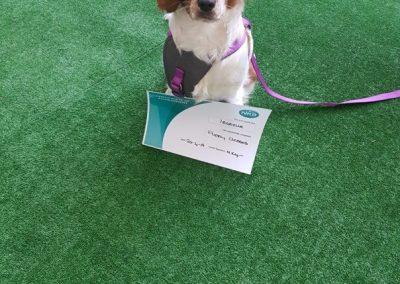 NK9 Dog Training Leeds Obedience (1)