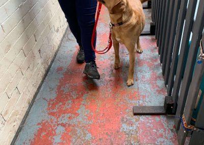 NK9 Dog Training Leeds Obedience (4)